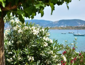 2017-06-07-Day-1-Greece-boatsflowers