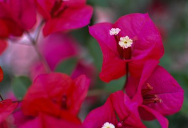2017-06-08-Day-3-Artemis-flowers3