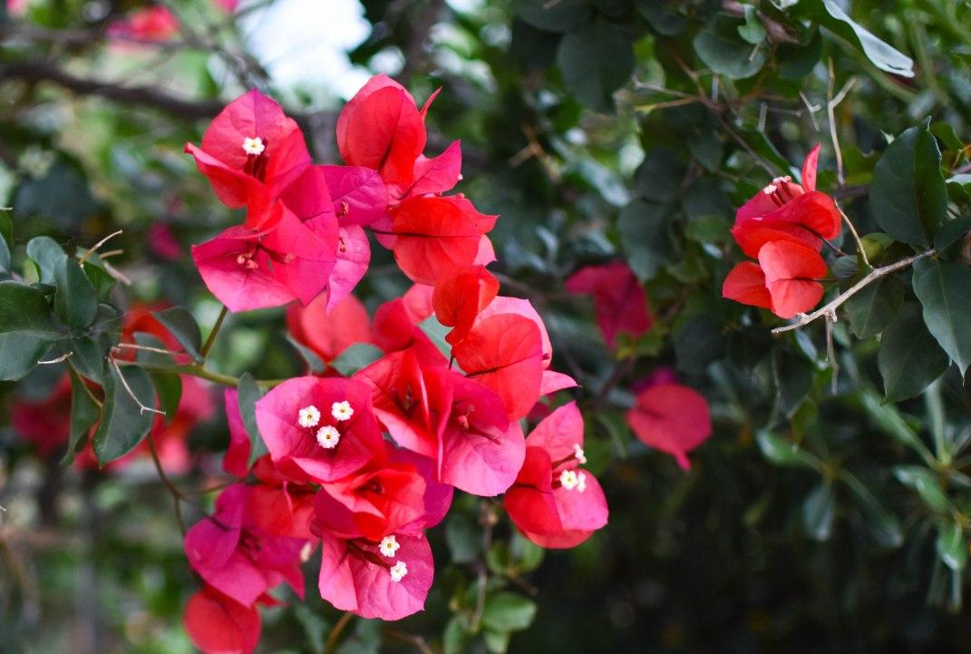 2017-06-08-Day-3-Artemis-flowers4