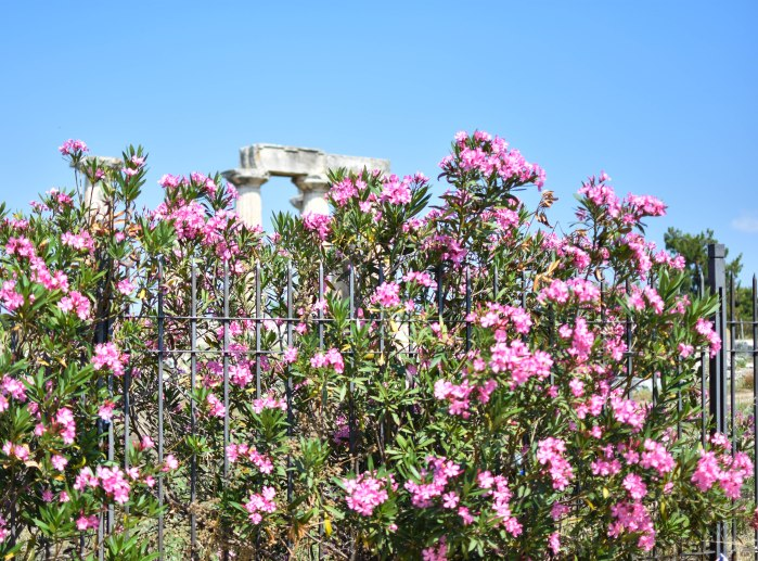 2017-06-09-Day-4-corinth-forum11