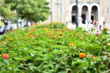 2017-06-11-Greece-Day-5-Athens-plaka-flower