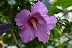 2017-06-11-Greece-Day-5-flower