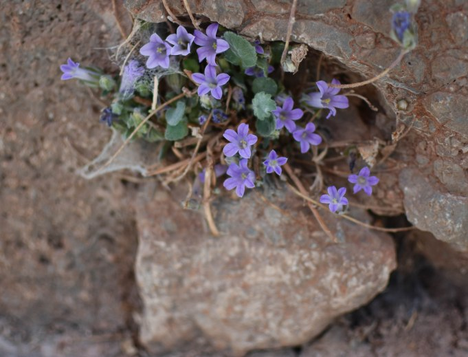 2017-06-14-Greece-Delphi-flowers1